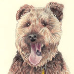 Sophie the Terrier