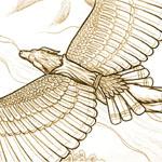 """Flight."" Auric Starstryder (http://www.furaffinity.net/user/canisaureus)"