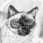 Memorial portrait of a Siamese cat.