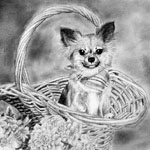 Dog in a basket. One of my favorites!