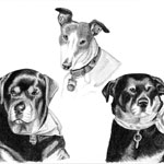 Memorial picture of three beloved family pets. The last of the three passed away during the drawing.